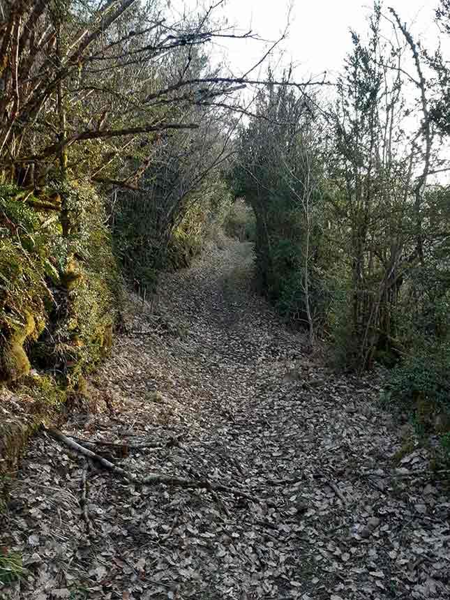 Sendero llano y con sombra, el camino viejo de Orbil
