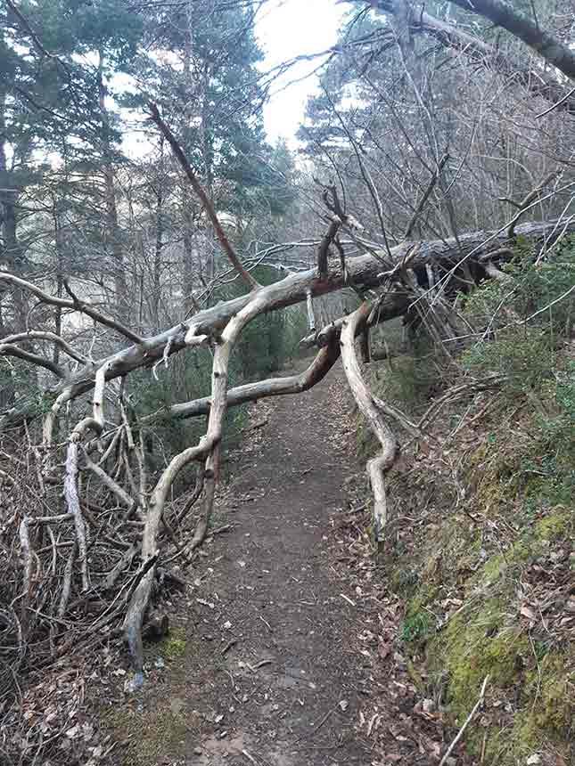 Un árbol tumbado forma un túnel en el Camino del Agua