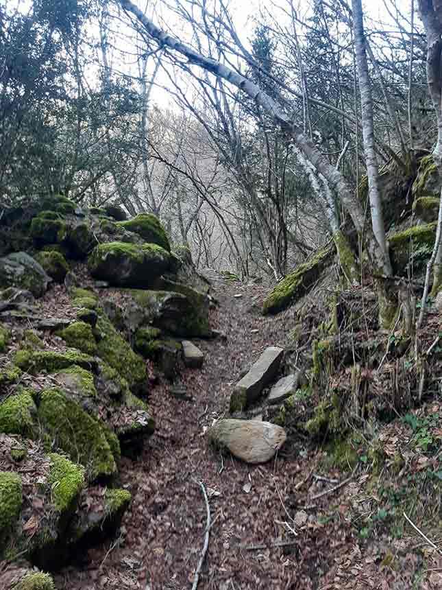 Sendero húmedo y boscoso en el Camino del Agua