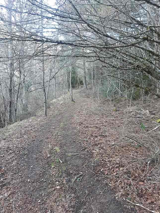 La sombra del bosque en el Camino del Agua de Villanúa