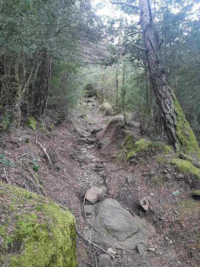 Terreno pedregoso y ascendente en el Sendero hacia Cenarbe