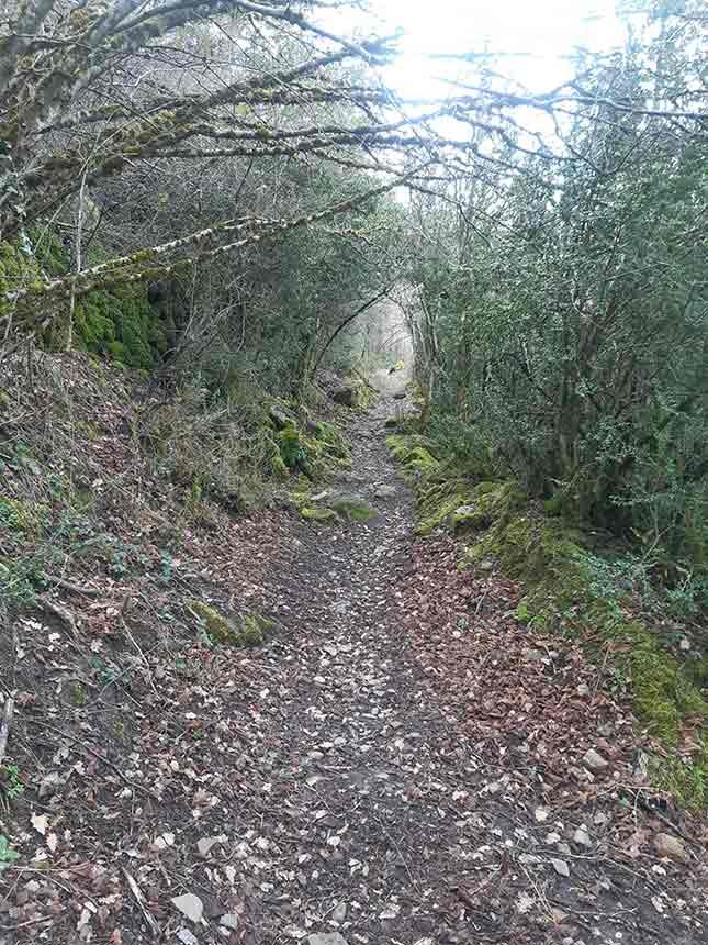 Espeso bosque hacia el Dolmen de Diezcapanas