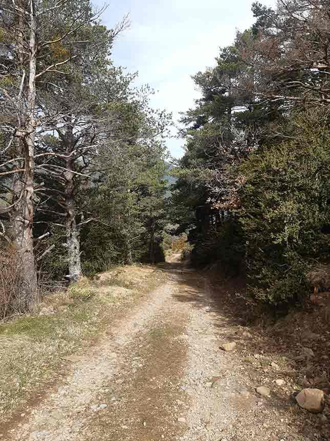 Pista forestal en el bosque de Villanúa
