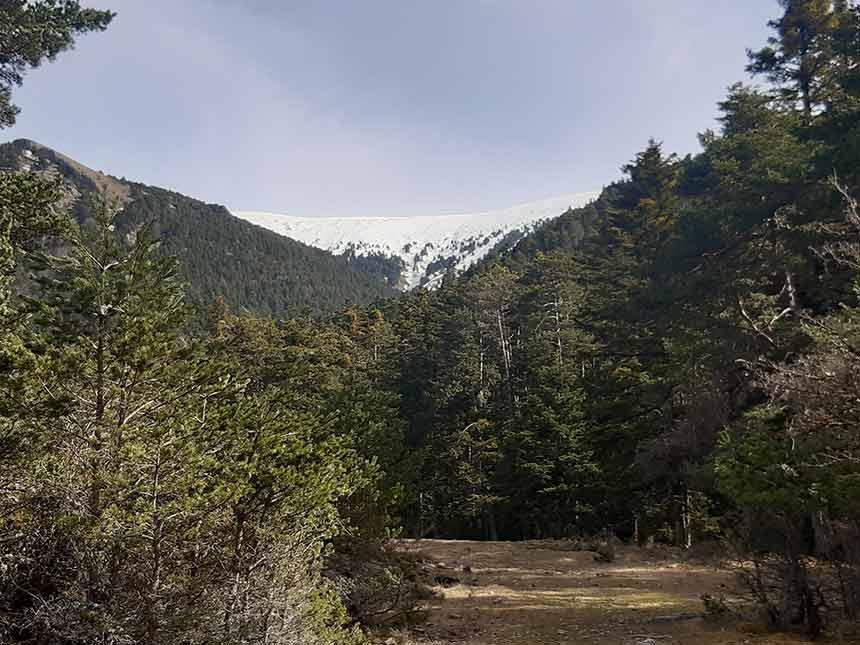 Sendero de la Fuente del Paco por Pico de la Selva