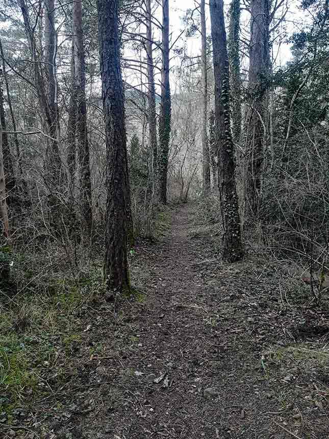 Bosque de pinos en el paseo de los Rigales