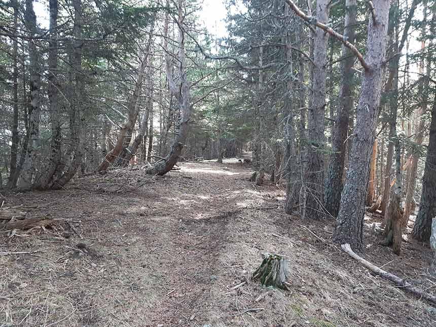 Punta de la Selva y su espeso bosque