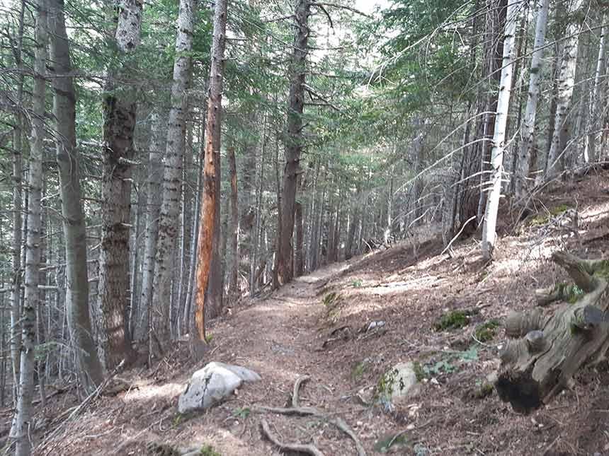 Bosque en el camino al Refugio de la Espata