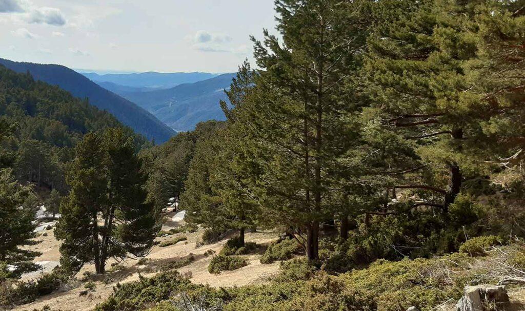 Zona de bosque en el Refugio de la Espata