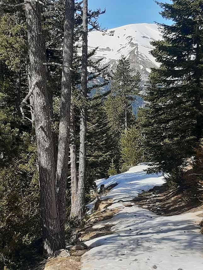 Sendero con nieve en el camino al Refugio de la Trapa por Barranco Azus
