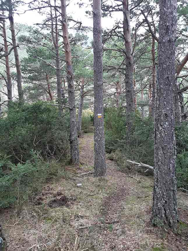 Sombra del bosque hacia los Altos de la Rapeda